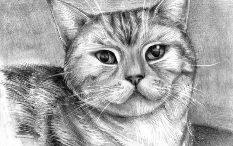 Как в фотошопе сделать карандашный рисунок из фотографии ?